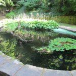 Jak vyčistit zahradní jezírko?