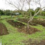 Jak připravit zahradu na zimu?