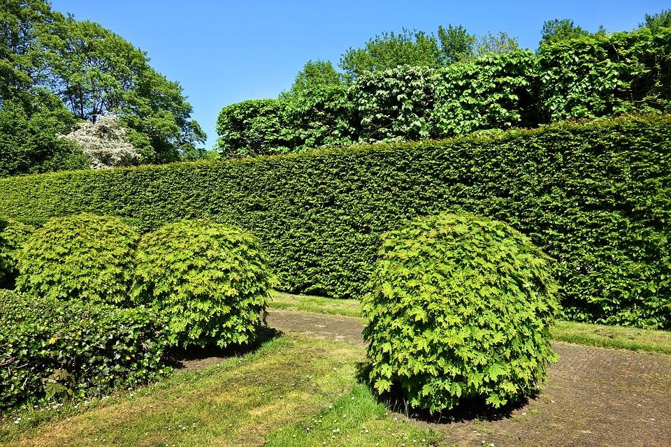 Tipy kdy a jak stříhat živý plot?