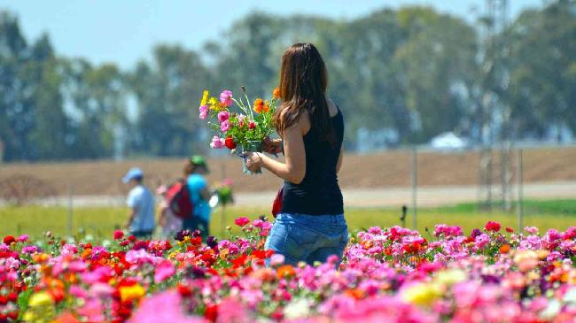 Okouzlující květinový záhon