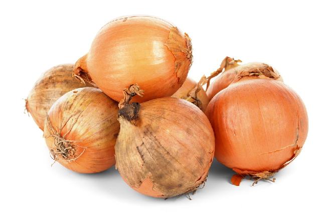 Pěstování cibule – Jak a kdy sázet – Semena vs. Sazeničky
