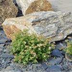 Okrasné kameny zkrášlí váš domov i zahradu