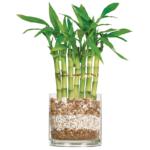 Nenáročné pokojové rostliny – 6 tipů na pokojovky pro začátečníky